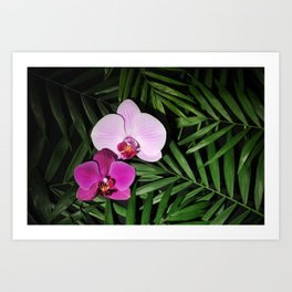 Orchids with palm leaves Art Print