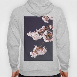 Cherry Blossoms (illustration) Hoody