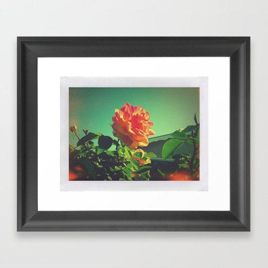 Spring Rose  Framed Art Print