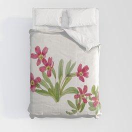 Primrose (Primula angustifolia) (1937) by Mary Vaux Walcott Comforters