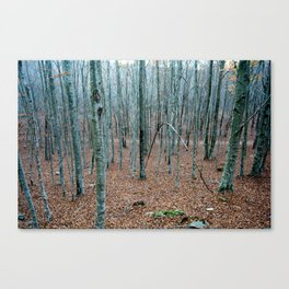 Typical autumnal postcard from the woods, with a scary atmosphere Canvas Print
