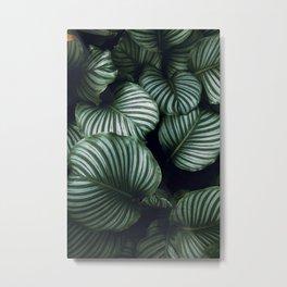 tropical xv Metal Print