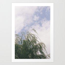 Weeping Winds Art Print