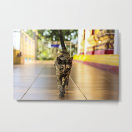 Fierce Kitty Metal Print