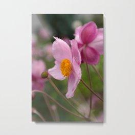 Pink Anemone Metal Print