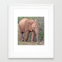 baby elephant Framed Art Prints featuring Baby Elephant by Lynn Bolt