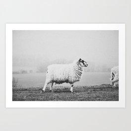 SHEEP II Art Print