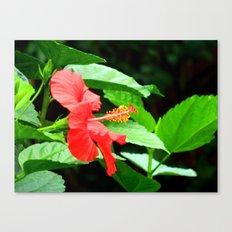 hibiscus profile Canvas Print