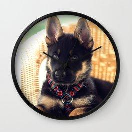Shepherd puppy in portrait Wall Clock