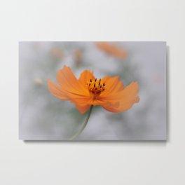 Cosmos Floral Metal Print