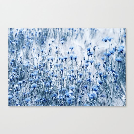 Cornflowers in summer time Canvas Print