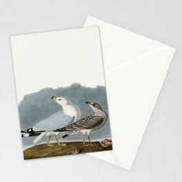 Vintage Seagull Illustration - Audubon Stationery Cards