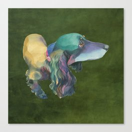 Longhaired Dachshund Canvas Print