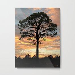 Florida Pine Tree Metal Print