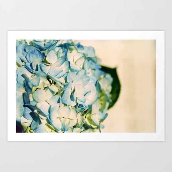 hydrangea II Art Print