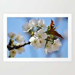 Now this is spring!  Art Print