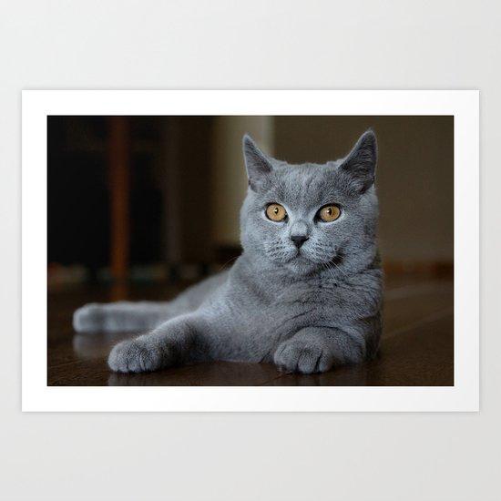 Diesel the cat 1 Art Print