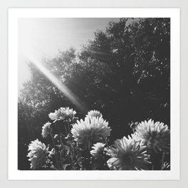 Sunbeam on Shadow Art Print