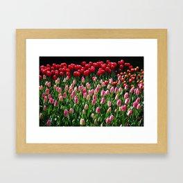 tulip galore! Framed Art Print
