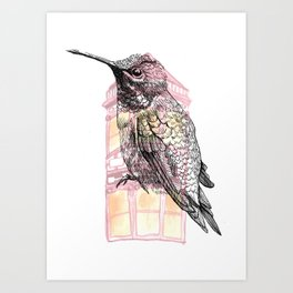 Urban Hummingbird Art Print