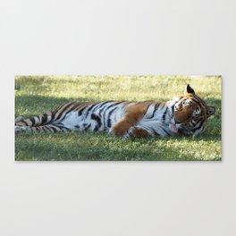 Lazy Tiger Canvas Print