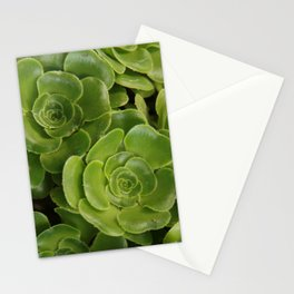 Aeonium plant 1838 Stationery Cards