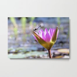 Lounging On A Lilly Metal Print