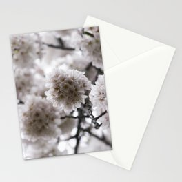 Light Pink Cherry Blossoms Photograph Stationery Cards