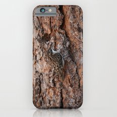 Brown Creeper Nuthatch iPhone 6s Slim Case