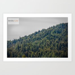 Redwood Treeline Art Print