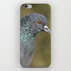 The great Indian pigeon iPhone & iPod Skin