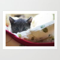 Shadow the Cat Art Print