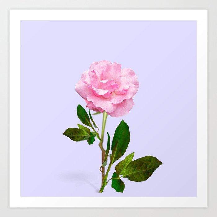 single pink rose for love art print by sharlesart society6