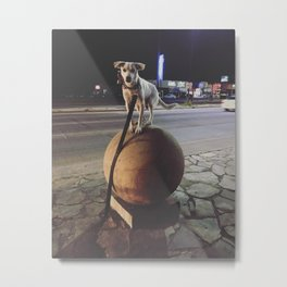 The mystery of the street dog Metal Print