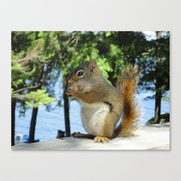 Snack time! Canvas Print