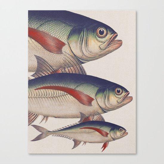 Fish Classic Designs 5 Canvas Print
