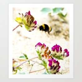 the flight of bumble bee on the dunes I Art Print