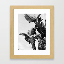 Tropical Palms Framed Art Print