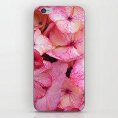 Pink Hydrangea iPhone & iPod Skin