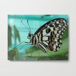 Buttefly Metal Print