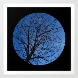 Trees from below 7 Art Print