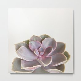Purple Succulent Metal Print