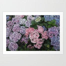 Purple Hydrangea Flowers Art Print
