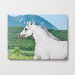 horse collection. arabian Metal Print