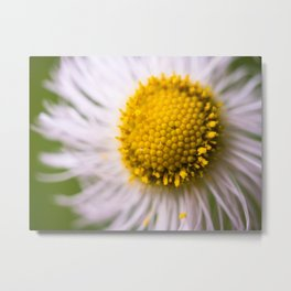 Golden in the Middle Metal Print