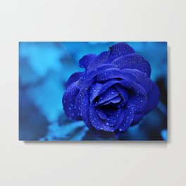 Blue rose Metal Print