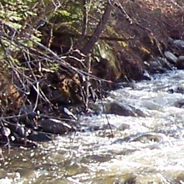 Swollen Creek Runs Wild Leggings