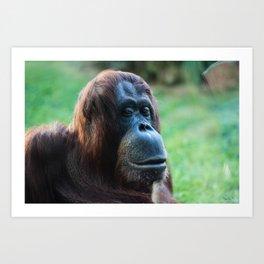 Viennese Orangutan Art Print