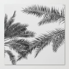 simply palm leaves Canvas Print
