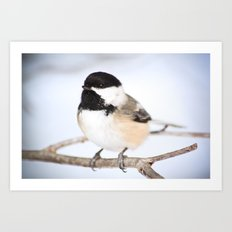 Up Close With A Chickadee Art Print